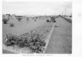 Queensland State Archives 4471 Eventide Home Sandgate grounds and gardens 1952.png