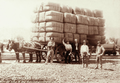 Queensland State Archives 5148 Bales of wool from Claverton Station loaded on dray with workers nearby c 1897.png