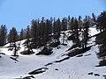 Quieu on spring - panoramio.jpg