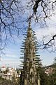 Quinta da Regaleira - Church and Pine (33032784806).jpg