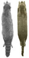 Raccoons of North & Middle America (1950) Skins of subgenera procyon & euprocyon.png
