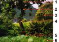 Rainforest Fatu Hiva microhabitats Polychrotidae.png