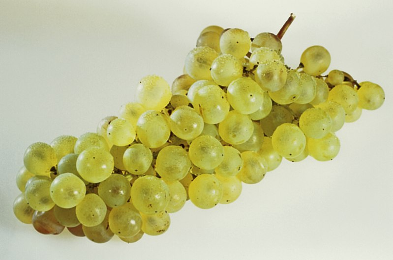 Raisin Muscat(France) Cl J Weber (23047034444).jpg
