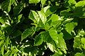 Ramat Gan Leaves 12 2015 (9).JPG