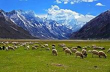 Rangdum village grazing fields.jpg