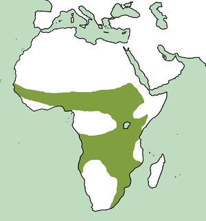 Black-bellied bustard - Image: Range of Lissotis melanogaster