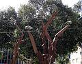 Raven on palm tree002.jpg