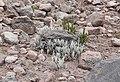Reserva de Producción de Fauna Chimborazo 05.jpg