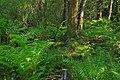 Reynolds Spring Natural Area (6) (29374882472).jpg