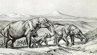 <i>Rhynchotherium</i> genus of mammals (fossil)
