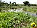 Ribeirão Banharão na SP-351, perto de Viradouro - panoramio.jpg