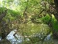 River Lyubushka.JPG