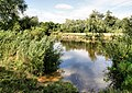 River Stour - geograph.org.uk - 1438165.jpg