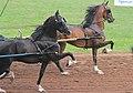 Roadster Ponies (7714710626).jpg