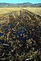 Robenhauser Riet 2012-01-18 14-46-56.JPG