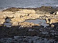 Rock pools north of Cullernose Point - geograph.org.uk - 1188478.jpg