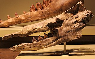 <i>Rodhocetus</i> Genus of mammals