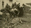 Rooseveltcroc.png