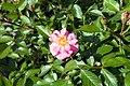 Rosa Baby Blanket 0zz.jpg