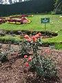 Rose Garden Ooty 2.jpg