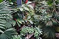 Rosine Smith Sammons Butterfly House & Insectarium August 2016 09.jpg