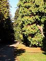 Royal Gardens at Kew (5341890816).jpg