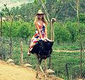 Russian Girl rides a Ostrich.jpg