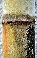 Rusted (11983554796).jpg