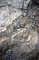 S of Mt Jackson granite gneiss breccia 2.jpg
