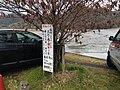 Sagahirosawa Ikeshitacho, Ukyo Ward, Kyoto, Kyoto Prefecture 616-8307, Japan - panoramio.jpg