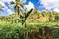 Samaná Province, Dominican Republic - panoramio (75).jpg