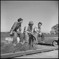 San Joaquin Valley, California. Contract Labor. The youngest migrant agricultural workers of American stock, and an... - NARA - 532159.tif