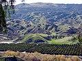 San Timoteo Canyon Groves, Redlands, CA 8-2011 (6836926431).jpg