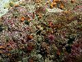 Sanc1665 - Flickr - NOAA Photo Library.jpg