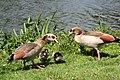 Sandringham 23-05-2011 (5757994909).jpg