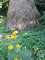 Sarmizegetusa Regia 2011 - Flowers and Romanian Traditional Haystack.jpg