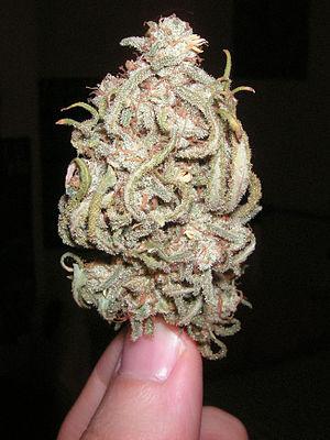 English: weed