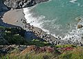 Seals at Godrevy 2009 (3474364104).jpg
