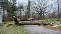 Section 22 tree down - Lake View Cemetery - 2014-11-26 (17516299286).jpg