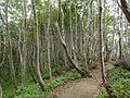Seonginbong Forest.jpg