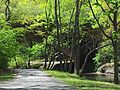 Sights on the Riverway in Boston, MA. 08.jpg