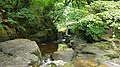 Silver River gorge, near Cadamstown, Co. Offaly. 04.jpg