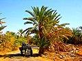 Siwa Oasis, Qesm Siwah, Matrouh Governorate, Egypt - panoramio (12).jpg