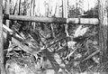 Skid road at lumber camp, near Wilkeson, July 26, 1893 (WAITE 64).jpeg