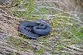 Snake alps.JPG