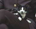 Socks the Cat in Hillary Clinton's lap 12-13-1995 (6461521265).jpg