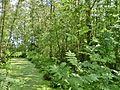 Soest Slangenbosje 06.JPG