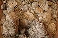 Soils of Château d'Yquem, Sauternes.jpg