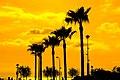 Sonnenuntergang Mit Palmen (68496311).jpeg