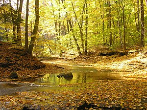 Southern Great Lakes forests - South Chagrin River near Cleveland, Ohio